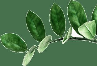 leaf thumb1